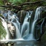 Dandenong Ranges, Olinda Falls, near Melbourne Australia